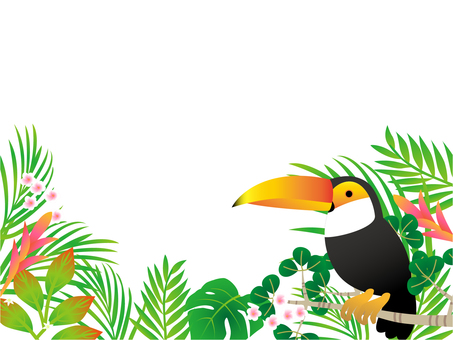 Dense forest and the Toucan
