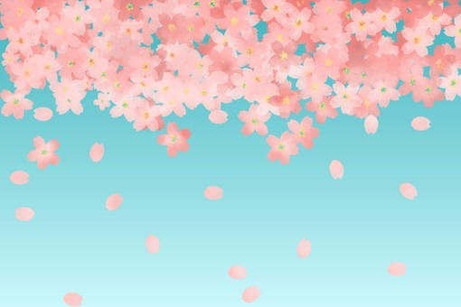 Cherry blossoms and blue sky background
