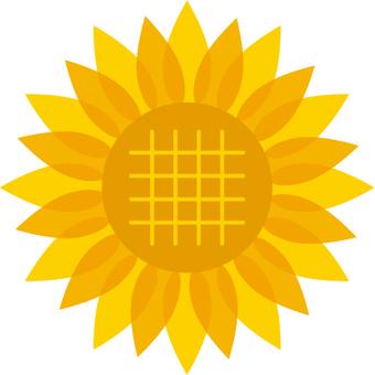 向日葵的插圖