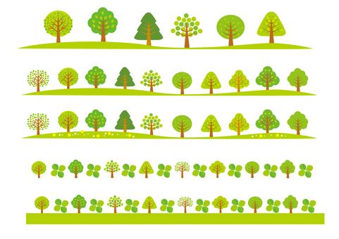 나무의 라인