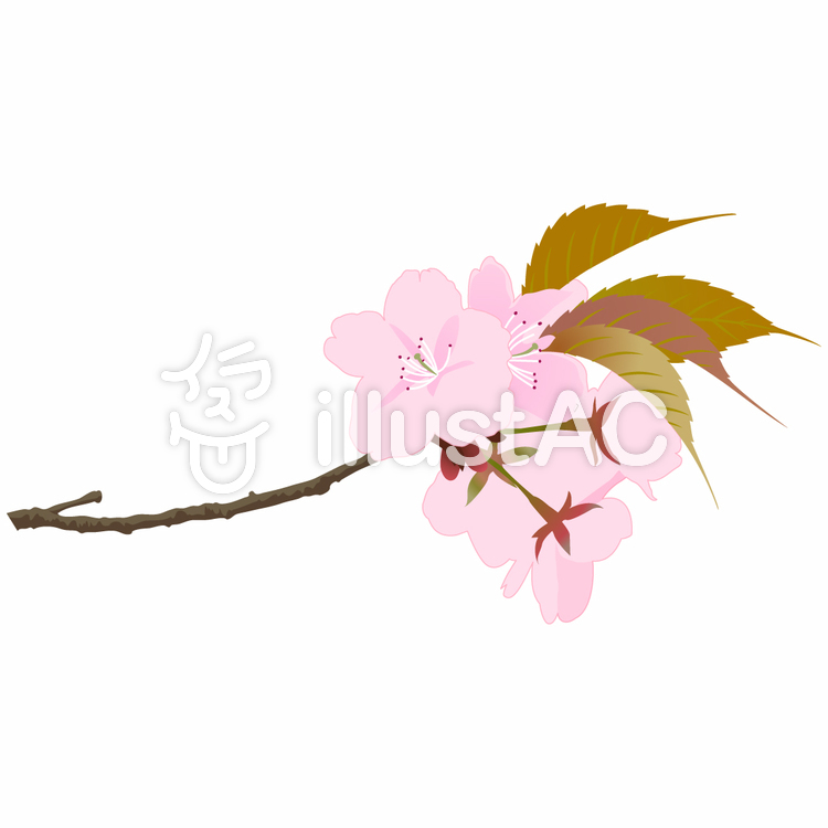 桜3のイラスト