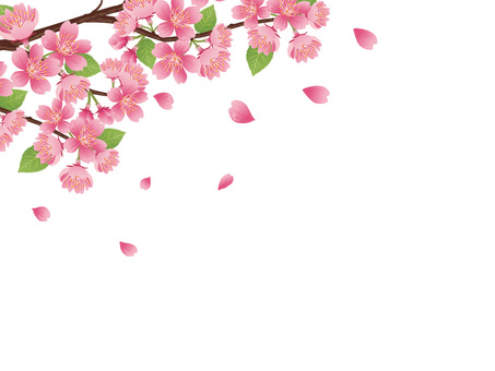 Spring realistic cherry branch material Flower · illustration 03