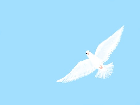 天空和鴿子系列!