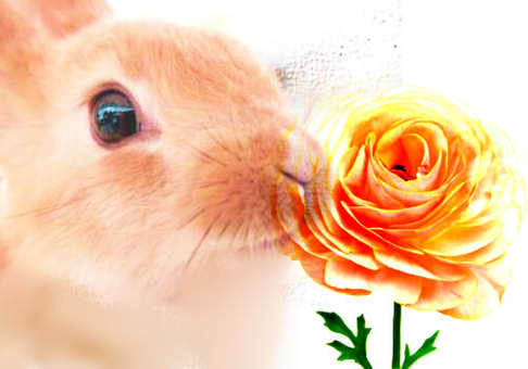 Rabbit and Ranunculus Flower