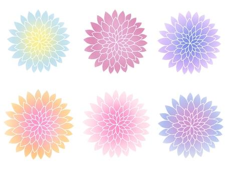국화 꽃 일러스트 세트