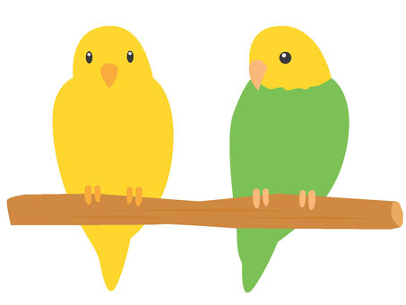 Two parrots of perch trees
