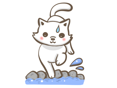 Surprised cat in the water