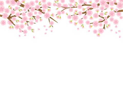 벚꽃 소재 11