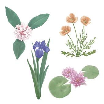 Seasonal flowers ~ spring summer ~