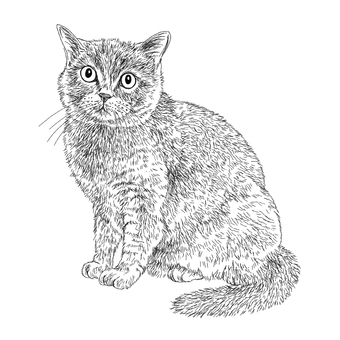 British cat painting / Black and white hand drawn illustration