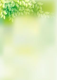 Fresh green 16