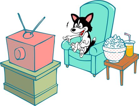 Dog laughing at home watching TV