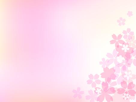 Cherry blossom image 002
