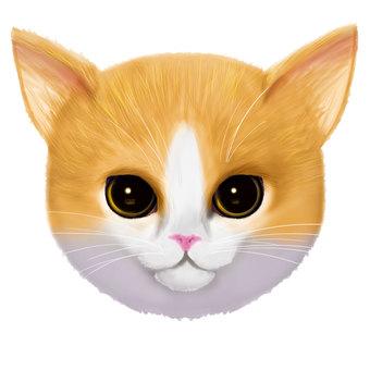 ネコ(つり目)