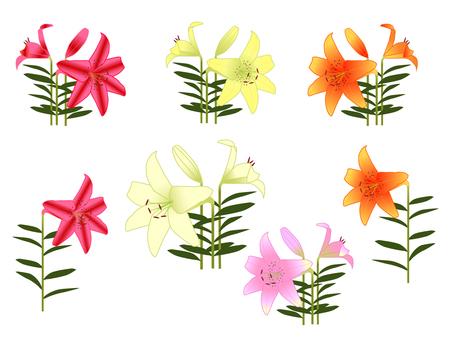 百合花卉插圖素材集