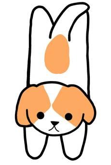 개 강아지 시추 애완 동물