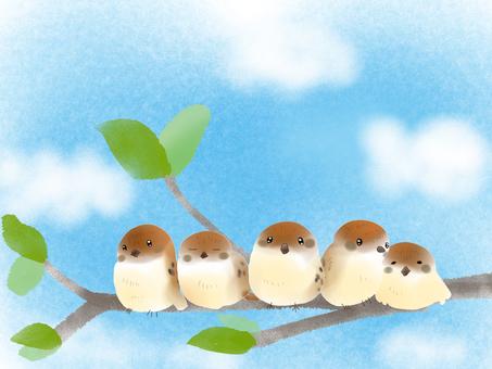 참새 나무와 하늘