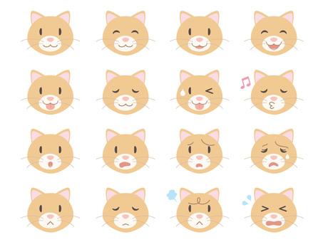 Cat face _ various facial expressions