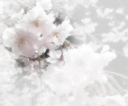 Flower message card 5-A