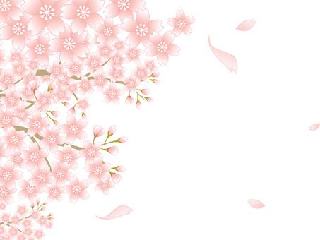 80220.桜風景,背景白2