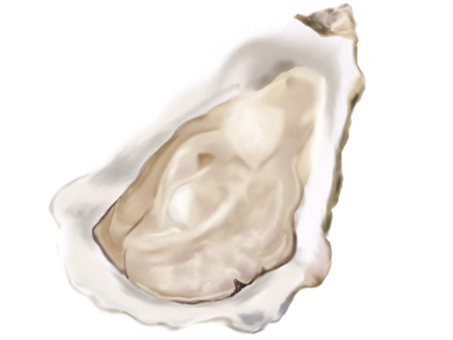 Illustration of oyster