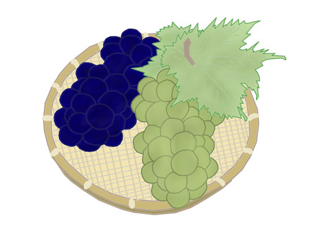 Picked fresh grapes