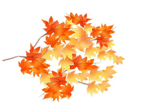 Momiji of autumn leaves ★ 0238-D
