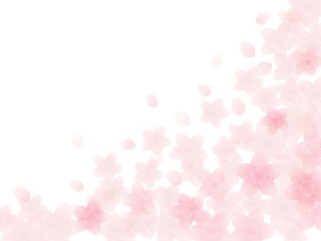 Sakura Frame 6