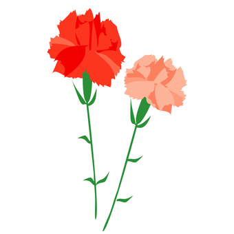 Two color carnation