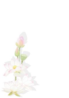 연꽃 카드