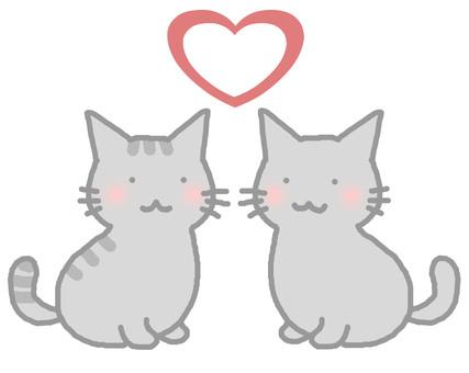 커플 고양이