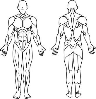 Human muscle figure