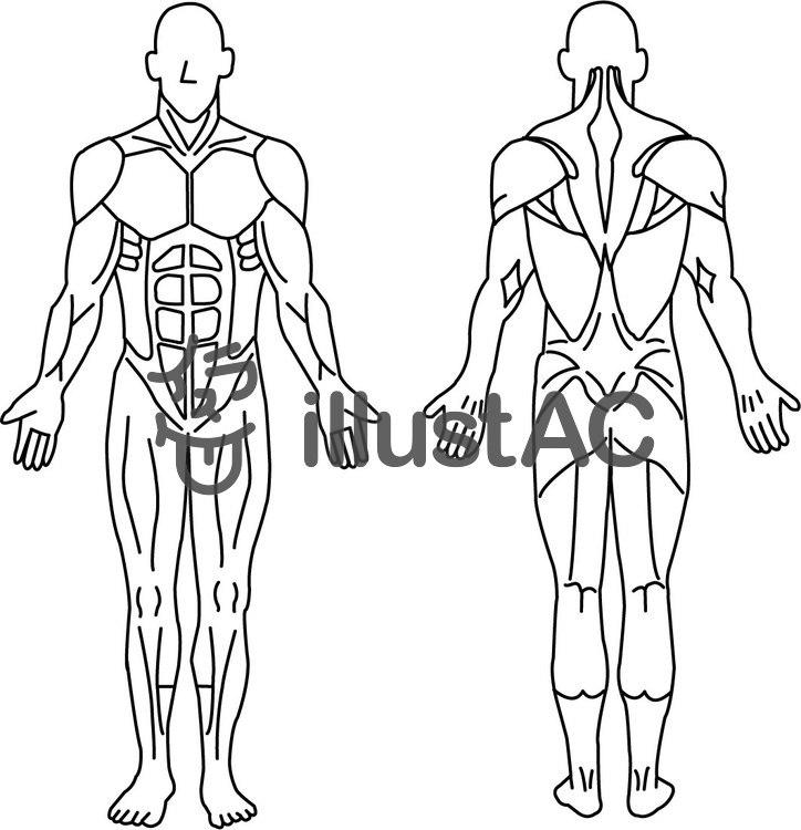 人体筋肉図イラスト No 306635無料イラストならイラストac