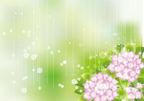 雨の中の紫陽花70
