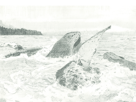 Drawings A group of whales that appeared on the sea surface