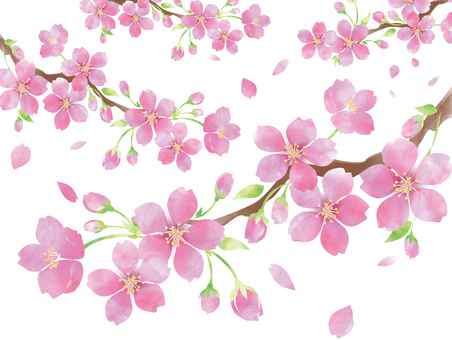 Watercolor style Sakura branch