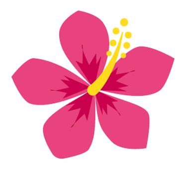 Flower - Hibiscus-07