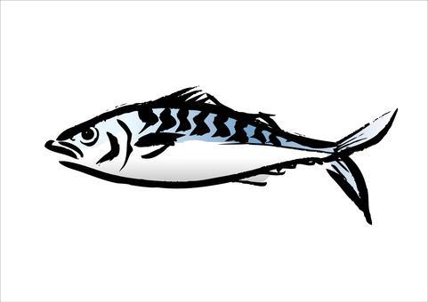 Mackerel 01