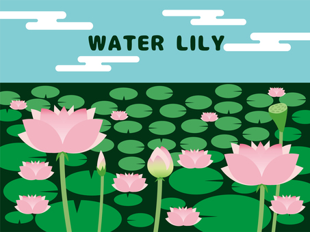 Water lily pond