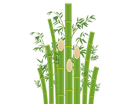 Bamboo with bamboo leaves _ Bamboo cutout 04