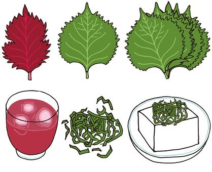 Perilla and large leaf