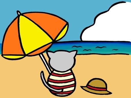 Beach cat color