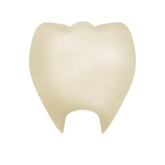 누르스름 한 치아 (윤곽선 없음)