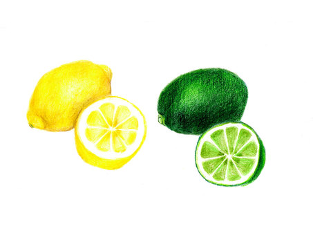 Lemon and lime (color pencil drawing)