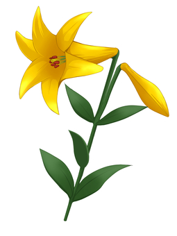 Lily (yellow)