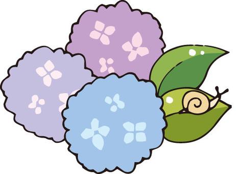 꽃 (수국)