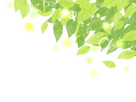 新緑 04