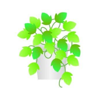 Houseplant - Ivy (flowerpot)