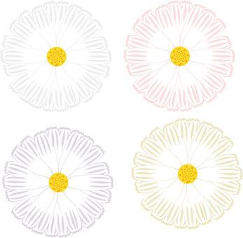 Daisy flower 2