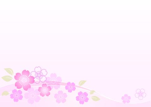 Cherry blossoms 142